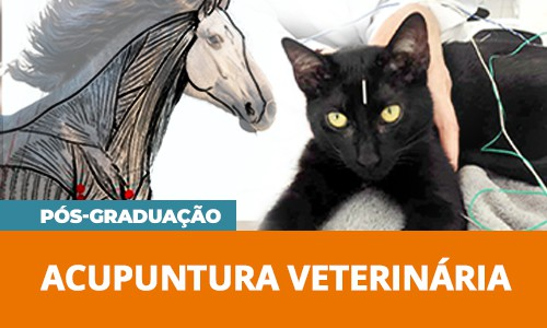pos-acupuntura-veterinaria-famesp