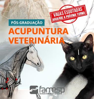 pos-graduacao-acupuntura-veterinaria-famesp-ayne-murata