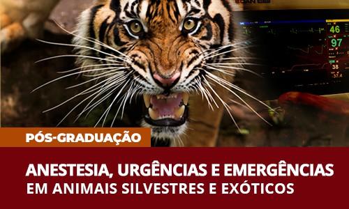 rodrigo-rabello-veterinaria-pos-graduacao-anestesia-urgencia-animais-silvestres-exoticos-famesp