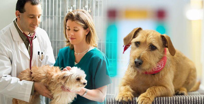 curso tecnico em veterinaria