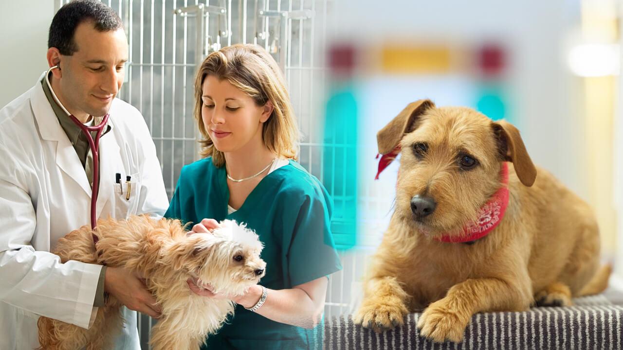 curso tecnico em veterinaria famesp