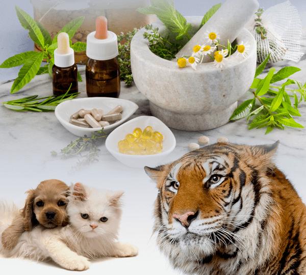 pós-graduação-homeopatia-veterinária