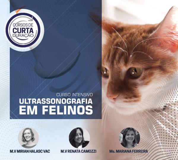 curso_ultrassonografia_felinos