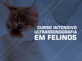 curso-aprimoramento-ultrassonografia-em-felinos-veterinaria-famesp