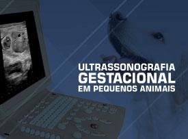 curso-aprimoramento-ultrassonografia-gestacional-veterinaria-famesp