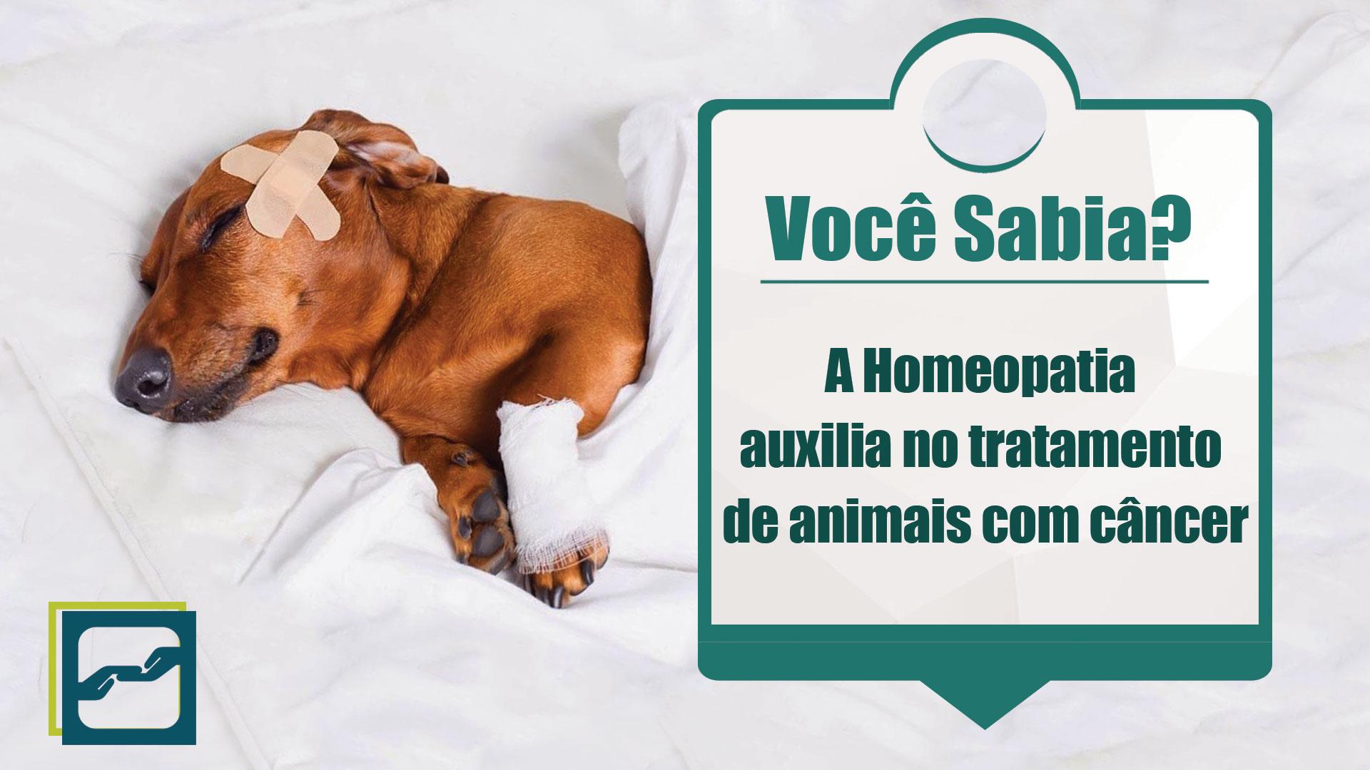 homeopatia_tratamento_cancer