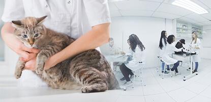 contencao animal famesp curso tecnico de veterinaria