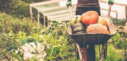 fazenda organica famesp pos graduacao curso de gastronomia funcional