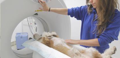 tomografia avancada famesp pos graduacao radiologia e tomografia veterinaria