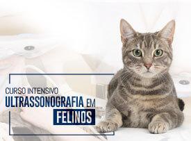 ultrassonografia-em-felinos-famesp