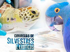 workshop-cirurgias-silvestres-exoticos-famesp