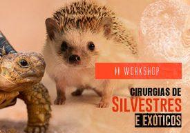 workshop-famesp-cirurgia-silvestres-exoticos