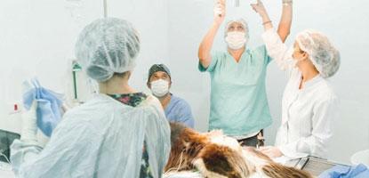 aulas-praticas-pos-graduacao-cirurgia-pequenos-animais-famesp