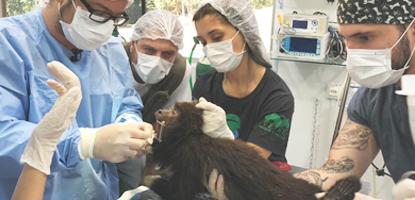 -cirurgia-silvestres-clinica-cirurgia-animais-silvestres-exóticos-famesp