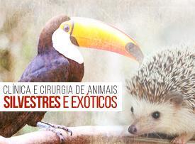 clinica-cirurgia-animais-silvestres-exóticos-famesp