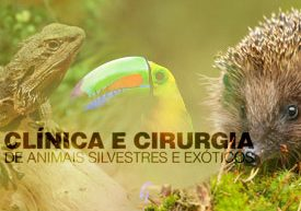 famesp-clinica-cirurgia-animais-silvestres-exóticos-famesp