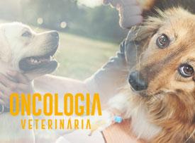 famesp-pos-graduacao-oncologia-veterinaria-famesp