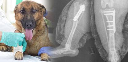 ortopedia-pos-graduacao-cirurgia-pequenos-animais-famesp