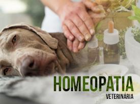 famesp-pos-graduacao-homeopatia-veterinaria