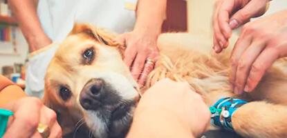 aulas-praticas-alternativos-pos-graduacao-acupuntura-veterinaria-famesp