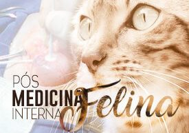 posgraduacao-medicina-interna-felina-famesp