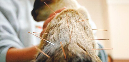 tecnicas-desenvolvidas-pos-graduacao-acupuntura-veterinaria-famesp