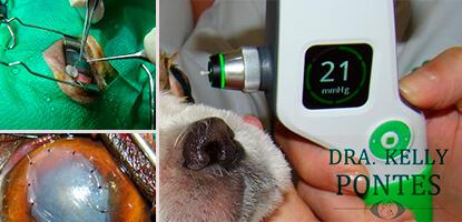 aulas-praticas-oftalmologia-veterinaria