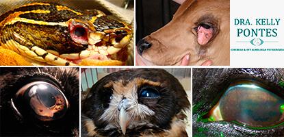 veterinaria-pos-oftalmologia