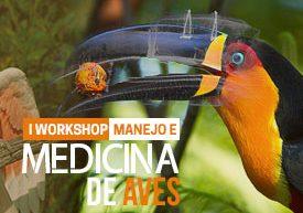 workshop-manejo-medicina-aves