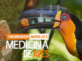workshop-manejo-medicina-aves