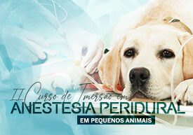 imersao-anestesia-peridural-pequenos-animais-famesp
