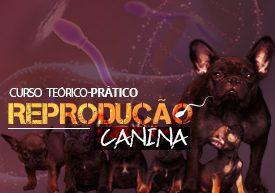 reproducao-canina-inseminacao-artificial-e-criopreservacao-famesp