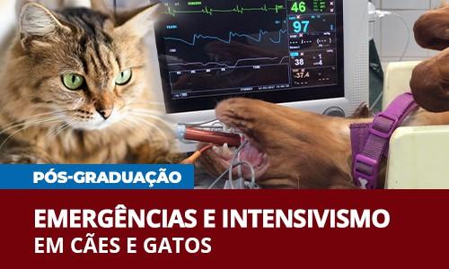 famesp-pos-graduacao-emergencias-intensivismo-caes-gatos-veterinaria