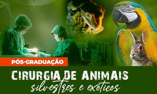 pos-graduacao-cirurgia-animais-silvestres-exoticos-famesp